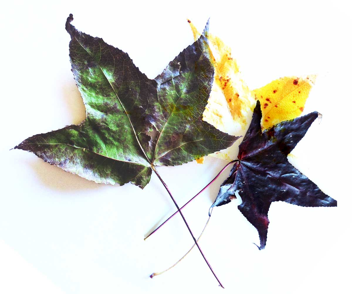 By using photos of leaves along with layers and blend modes, your kid can produce interesting collages and learn about light mixing.