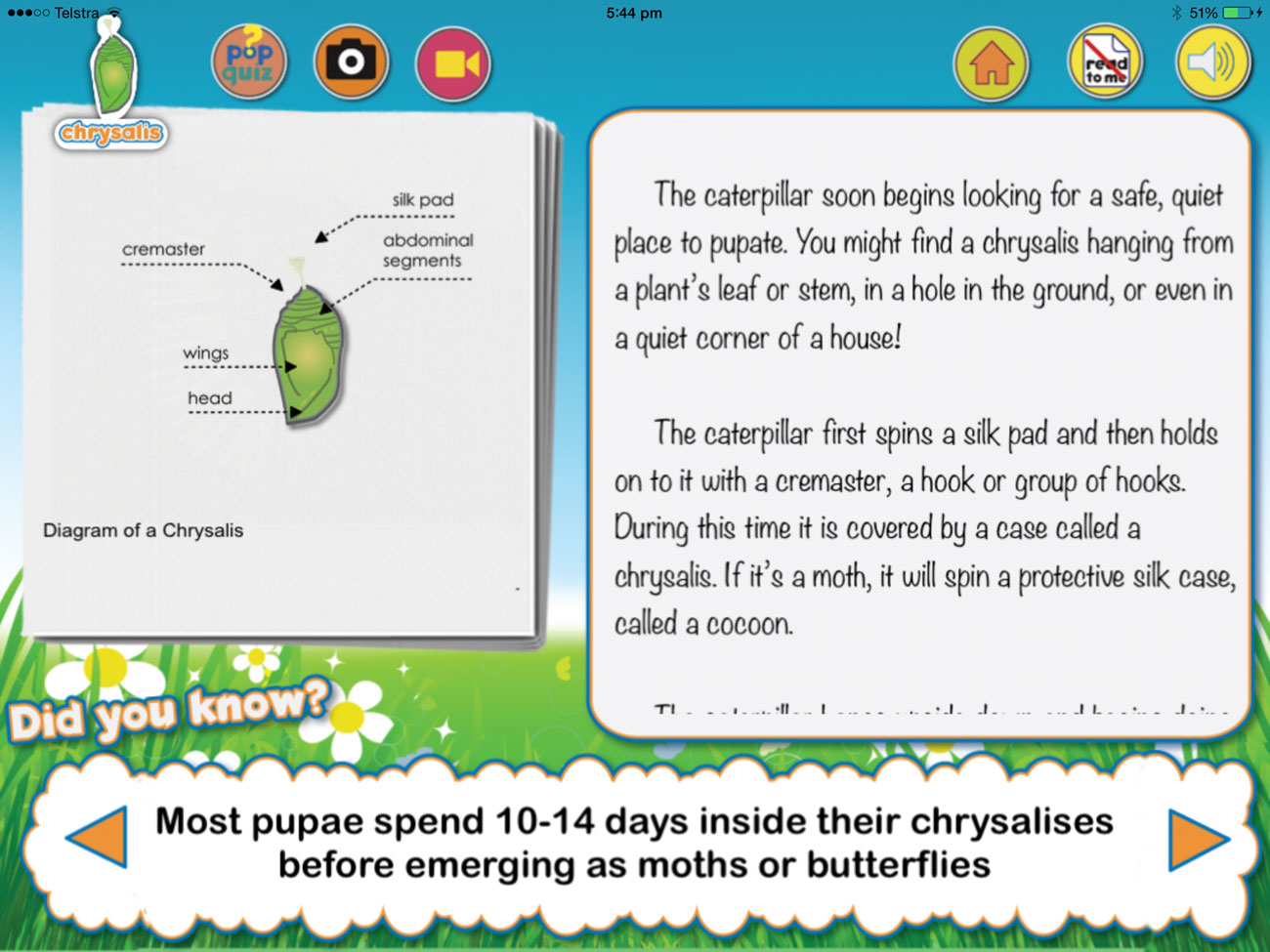 Butterfly HD from Sprout Labs teaches kids about the life cycle of butterflies.