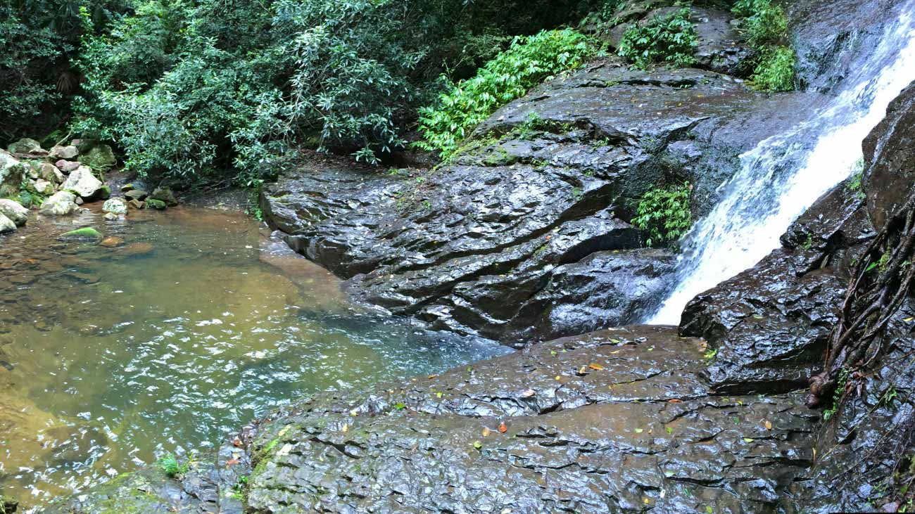 Natural rainforest and waterfall